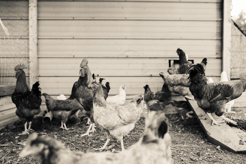 Das Huhn, das Ei oder wer war zuerst da?