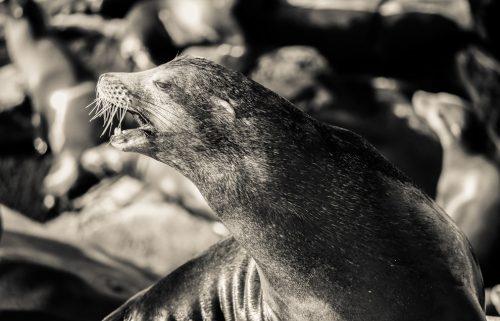 Wie sprechen Tiere über das Leben?