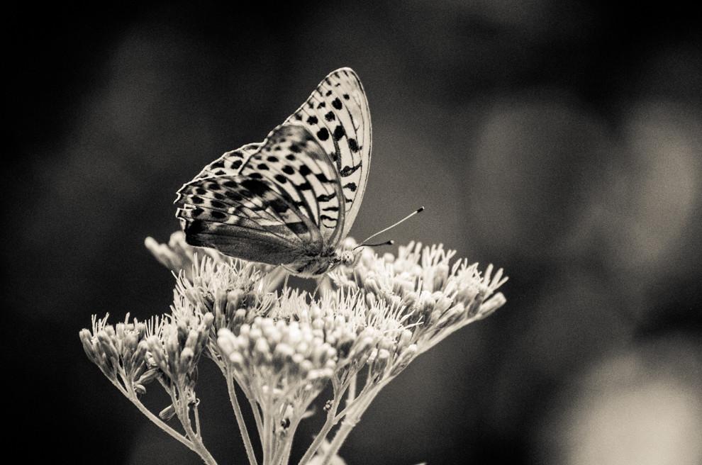 Räume, Zwischenräume und Schmetterlinge?
