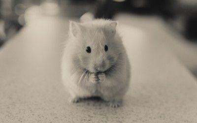 Konsumenten sind die neuen Hamster?
